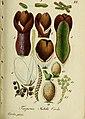 Deutschlands flora in abbildungen nach der natur (1832) (20268477543).jpg