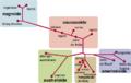 Diagrama genético ADN mapa raza caucasoide mongoloide negroide australoide amerindio.png