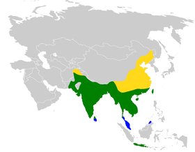 Dicrurus macrocercus distribution map.png
