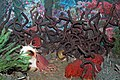 Diorama of a Permian seafloor - coiled cephalopod, sponges, algae (43887731060).jpg