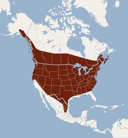 Distribution of Lasionycteris noctivagans.png