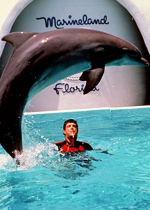 Marineland of Florida - Dolphin Show