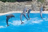 Dolphins Loro Parque BW 1.jpg
