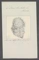 Doris limbata - - Print - Iconographia Zoologica - Special Collections University of Amsterdam - UBAINV0274 080 21 0012.tif