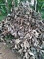 Dried leaves.jpg