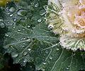 Droplets 2a (6441573211).jpg