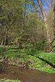 Duben vysenske kopce 20.jpg