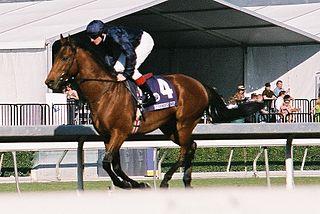 Duke of Marmalade Irish-bred Thoroughbred racehorse
