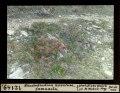 ETH-BIB-Rhododendron hirsutum Samnaun-Dia 247-12149.tif