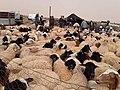 Ecole primaire Ras El Oued 04.jpg