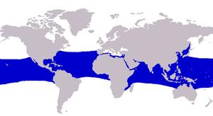 Rainbow runner - Image: Elagatis bipinnulata distribution
