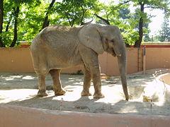 Elefante jerez.jpg