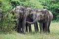 Elefantentrio (25581038110).jpg