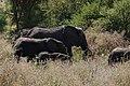 Elephants, Tarangire National Park (16) (28416245590).jpg
