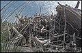 Empilement de souches de pins après désouchage d'une coupe rase 2018 Landes de Gascogne 15.jpg