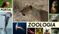 Entèsta Zoo6.png