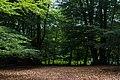 Epping Forest - panoramio - Alexey Komarov (2).jpg