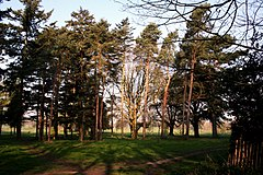 Ewell, Surrey, Trees in Nonsuch Park - geograph.org.uk - 1732562.jpg