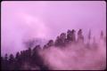 FOG SHROUDED MATURE TIMBER AT FLAT BOTTOM CREEK ROAD IN OLYMPIC NATIONAL TIMBERLAND, WASHINGTON. NEAR OLYMPIC... - NARA - 555126.tif