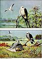 Falconry, the sport of kings (1920) (14752145032).jpg