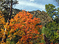 Fall Colors in West Fork - 2010 (5179031748).jpg