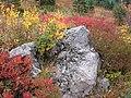 Fall colors (0a5e92027bf54491a71dd1f6f9a778c9).JPG
