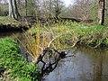 Fallen tree at Minnowburn - geograph.org.uk - 774604.jpg