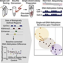 Single cell sequencing - Wikipedia