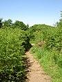 Farm - Common - Public Land near Irby - geograph.org.uk - 824367.jpg