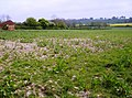 Field at Lawn Hill - geograph.org.uk - 460701.jpg