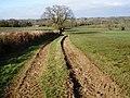 Fields, near Churchstanton Hill - geograph.org.uk - 1187003.jpg