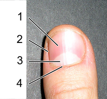 ongles plats signification