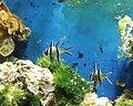 Fische Meereszentrum Fehmarn.jpg