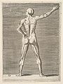 Flayed man seen from the back, his right arm extended MET DP812689.jpg