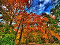 Flickr - paul bica - autumn falls....jpg