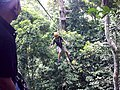 Flight of the Gibbon - panoramio.jpg