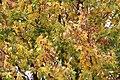 Flora della Sardegna 010 (06).jpg