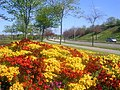 Floral Displays in Aberdeen - geograph.org.uk - 118951.jpg