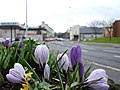 Floral display at Dublin Road, Omagh - geograph.org.uk - 346271.jpg