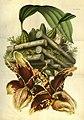 Flore des serres et des jardins de l'Europe - vol. 07 - page 713-715.jpg