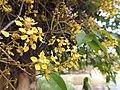 Flores. - panoramio.jpg