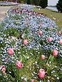 Flower-center134401.jpg