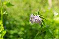 Flower (17990620506).jpg
