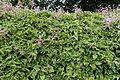 Flower 1160.jpg