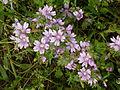 Flower 1350565.jpg
