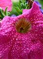 Flower 13a.JPG