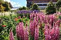 Flower garden in Ushuaia (5543015603).jpg