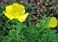 Flowers (6789342206).jpg