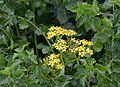 Flowers June 2013-1.jpg