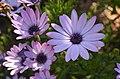 Flowers XXIII (41792147552).jpg